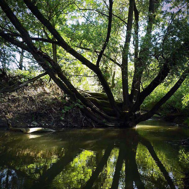 Rieka Myjava